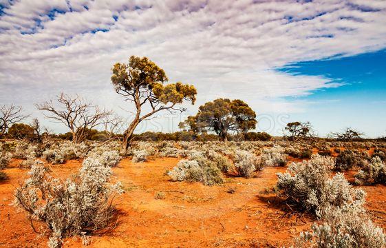 The Australian desert, the outback