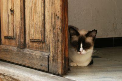 Lurking cat