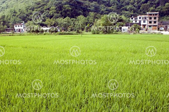 Chinese rice fields in Guilin