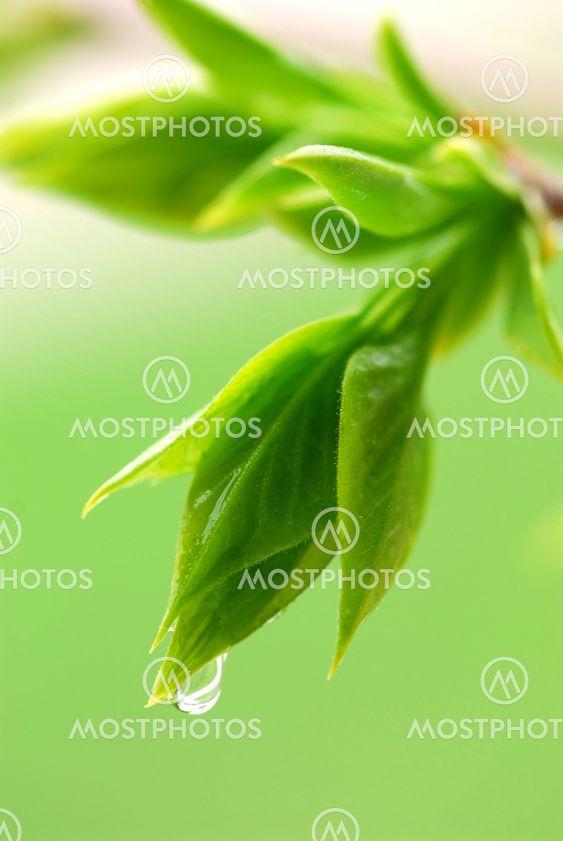 Foråret grønne blade
