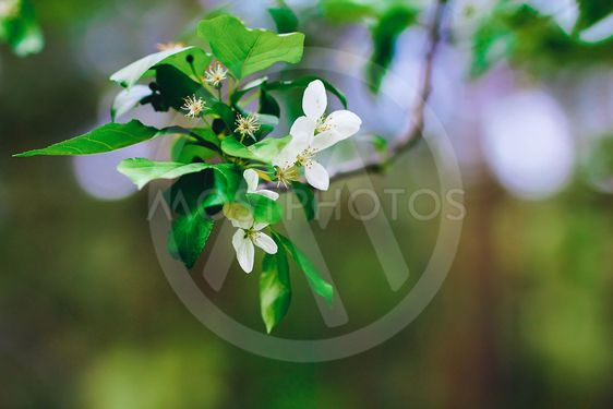 white flower on a branch