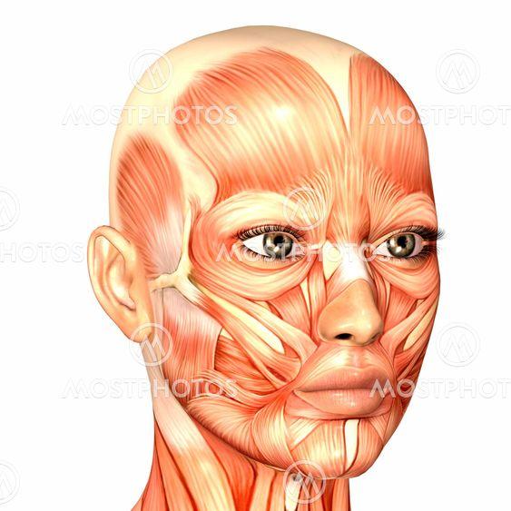 Weibliche Gesicht-Anatomie\