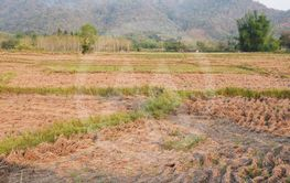 a view of the barren rice field