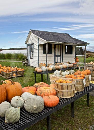 Farming, pumpkins display