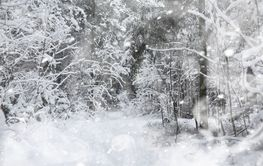 Winter landscape. Forest under the snow. Winter in the...