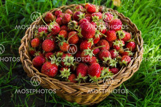 Berries of strawberry