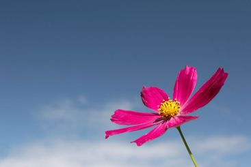 Flowers on a sky background