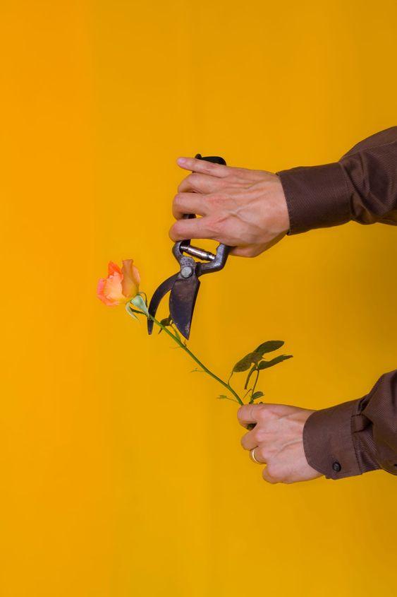 Destroying a rose