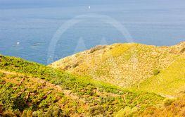 Vineyard landscape near Banyuls sur Mer, Pyrenees...