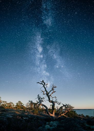 Silhouette of dead tree against epic star sky