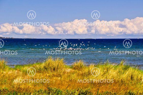 Eastcost af Jutlandia, visning til havet med masser af seagulls