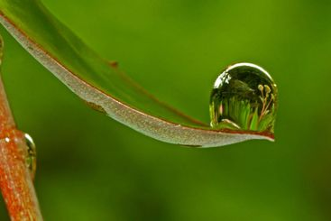 Reflection in a drop_10