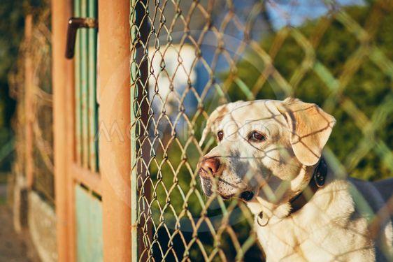Dog waiting behind fence