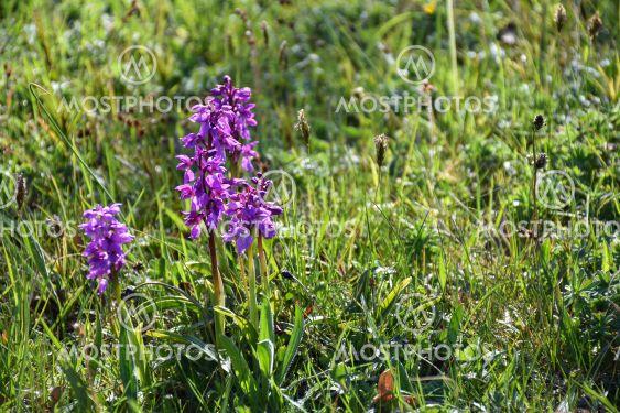 Blommande orkidéer i vårsolen