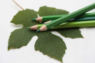 Drawing a grape leaf