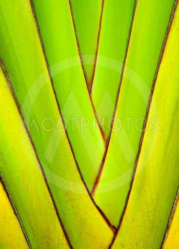 Trunks of banana plants. Abstract tree background....