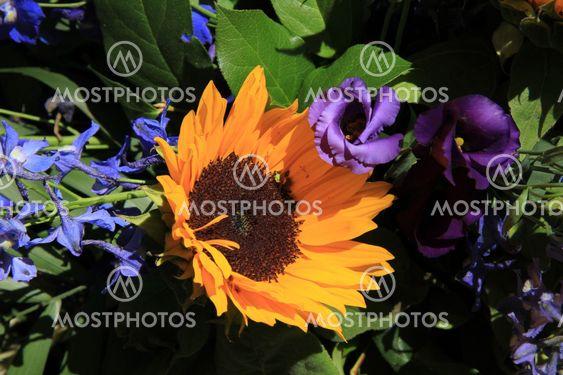 Sunflowers and purple eustoma