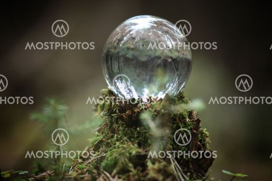 Crystal ball. A magical accessory in the woods on the...
