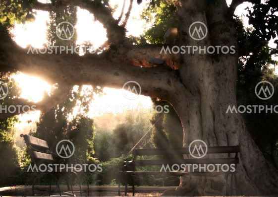 Woman In The Tree