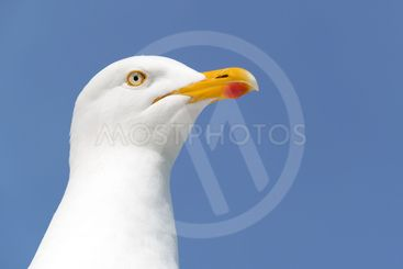 Seagull bird looking out to sea