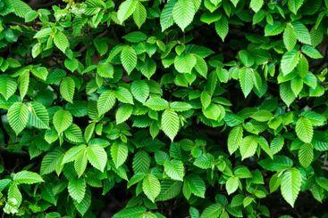 green leaf background, floral design, nature and...