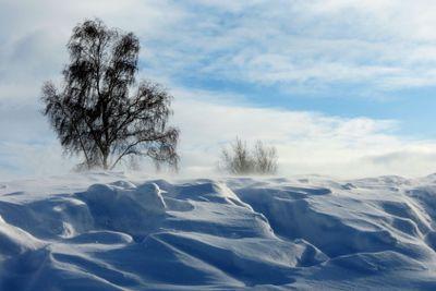 Снежная  поземка.