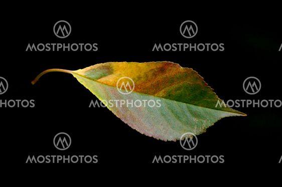Lonley autumn