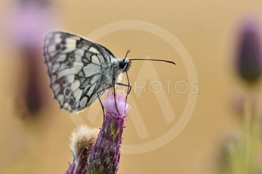 Beautiful colorful butterfly sitting on flower in nature....