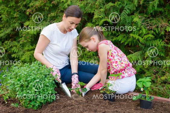Mother and daughter planting young lettuce seedlings in...