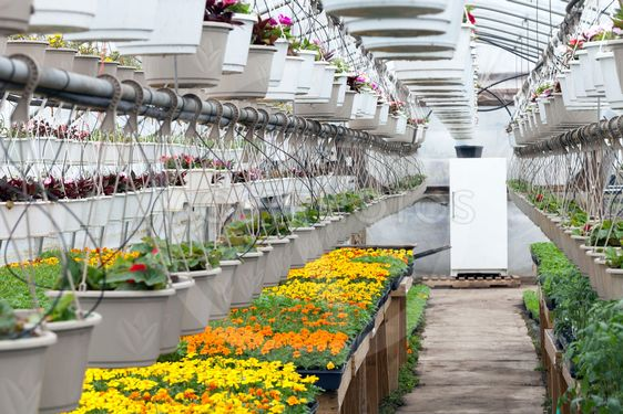 Greenhouse Nursery Flowers