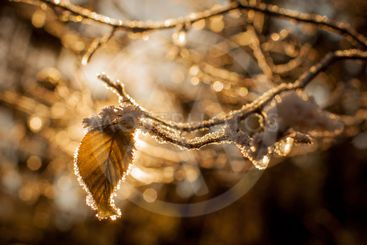Leaves and branches in cold weather with frost