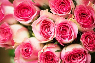 Nice roses in celebration concept