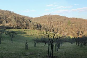 Hiking at seven mountains in germany near loewenburg...