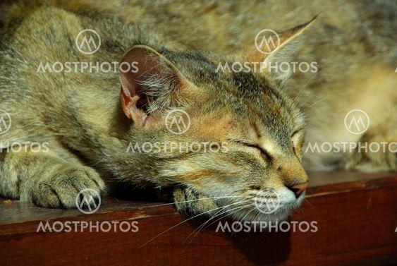 Katze - cat 10