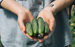 Cucucmbers in female hands, outdoors