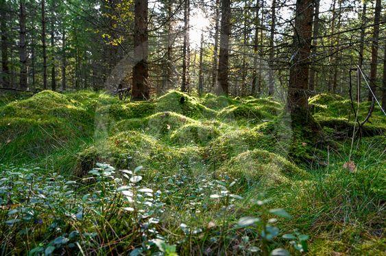 mossig mark med solljus genom träd