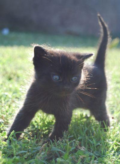 Small black cat 2