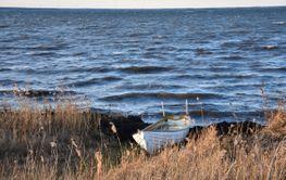 Vit liten fiskebåt vid kusten