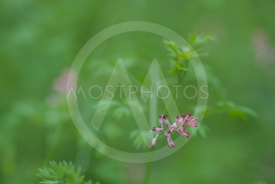 background blur garden plants