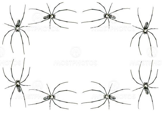 Spider kehys