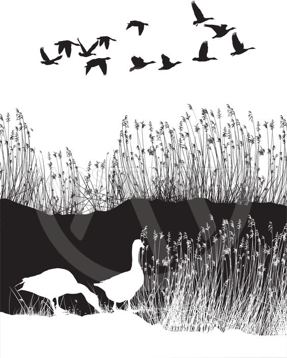 wild geese analysis Here is a poem analysis of mary oliver's poem wild geese, which informs the reader on how to live a worthwhile, good lifethroughout the poem, oliver furthers her message by using specific images from nature.