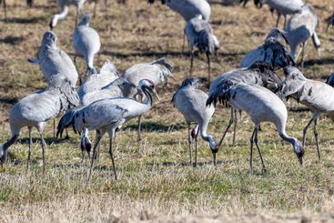 Cranes on a field on a sunny day