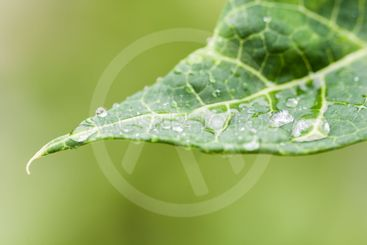 Closeup of raindrops on a leaf with out of focus background