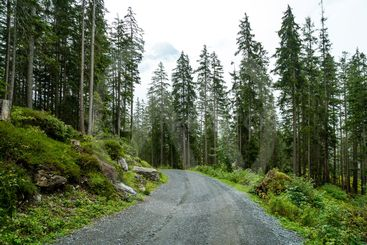 empty way with forest and foggy
