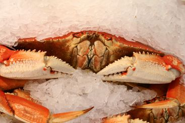 Crab front view at pike's market