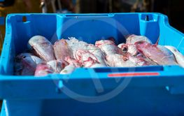 Containers with catch sea fish delicacies Blanes