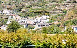 vineyard, Valle d'aosta in Italy