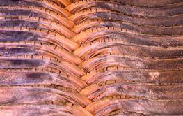 Palmenstruktur
