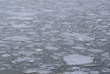 River ice flowing through calm waters.