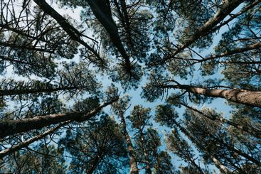 A background made of the top of the trees during a...